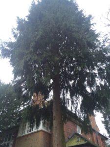 Proximety of Trees